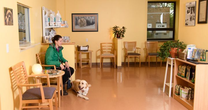 Veterinary Waiting Room