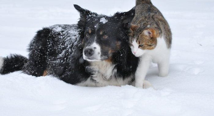 Pet Care Winter Several