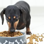Commercial Dog Food01