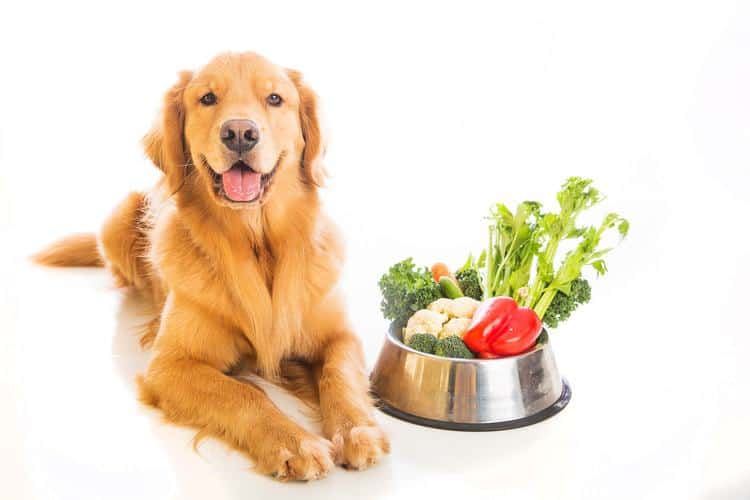 Healthy Dog Foods