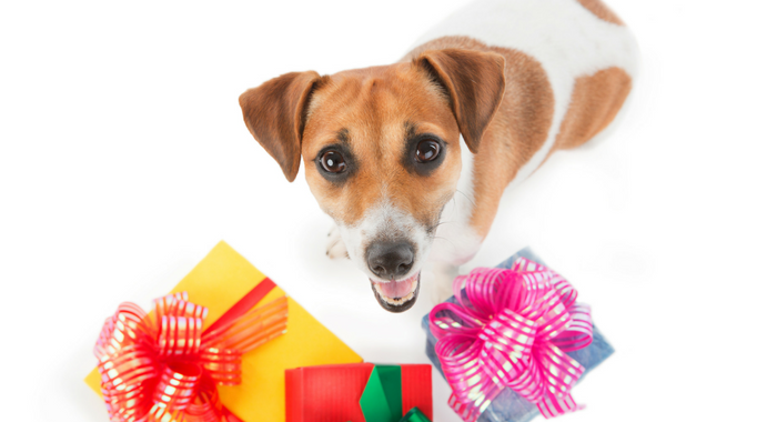 Gift Your Dog for Being a Very Good Pet