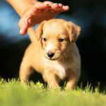 Learn About Adopting a dog