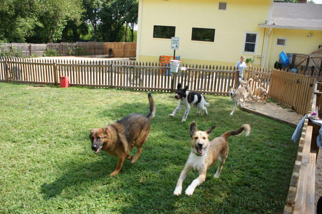 Pet Daycare Service
