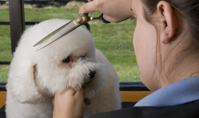 Training from Pet Grooming School