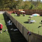 Tips to Consider While Choosing A Pet Boarding Facility