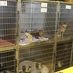 Questions You Need to Ask A Boarding Kennel Before Leaving Your Pet