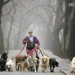 Dog Walkers: A Journey Of Endless Love And Affection