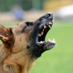 How To Deal With Your Aggressive Dogs