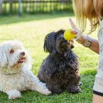 How To Find The Best Dog Trainer For Your Pooch