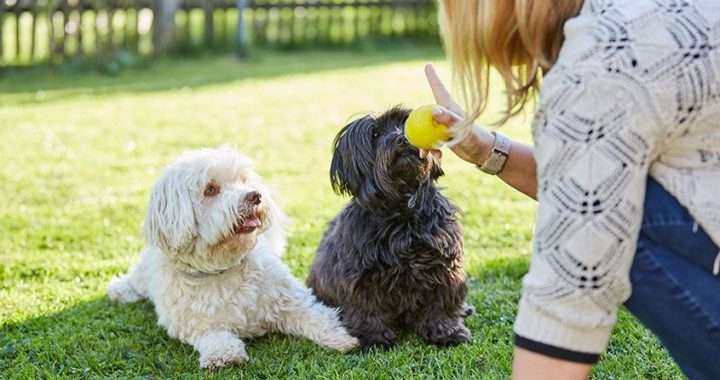 Dog Trainer For Your Pooch