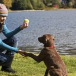How to Train Your Dog – The Basics