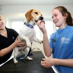 What is the role of Veterinarians?