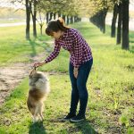 Six Common Dog Training Mistakes to Avoid