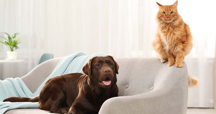 Pets Happy and Comfortable during Winters & Summers