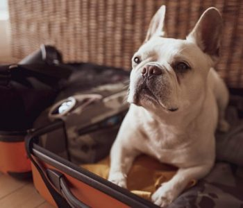 Pet Boarding Experience in Charlotte NC