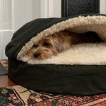 Why picking the Right Dog Bed is significant.