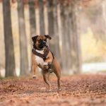 Dog harnesses: why are they better than collars?